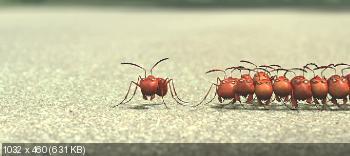 �������. ����������� � ������ �������� / Minuscule - La valle des fourmis perdues (2013) BDRip-AVC