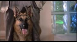 K-9: Собачья работа [Трилогия] (1989-2002) DVDRip от MediaClub {Android}
