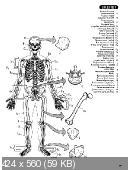 Эдуард Алкамо - Атлас анатомии человека (2008)
