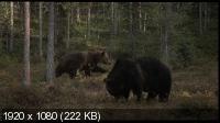 Чудесный лес / Metsän tarina (Tale of a Forest, Wunder des Waldes) (2012) BDRemux