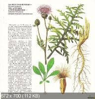 А. В. Фисюнов - Сорные растения (1984)